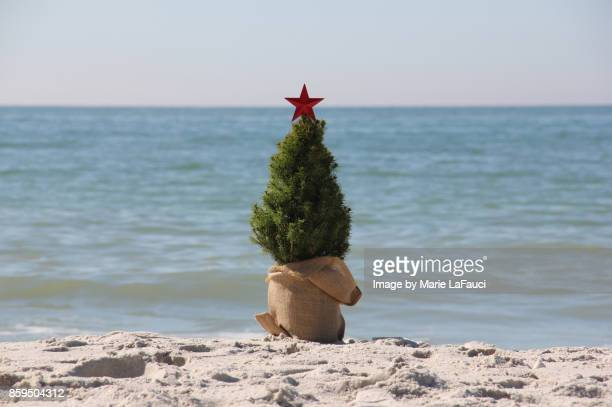 Summer Christmas tree at the beach