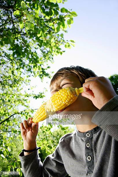 Summer corn in the sun