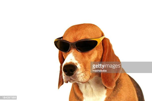 summer dog 2