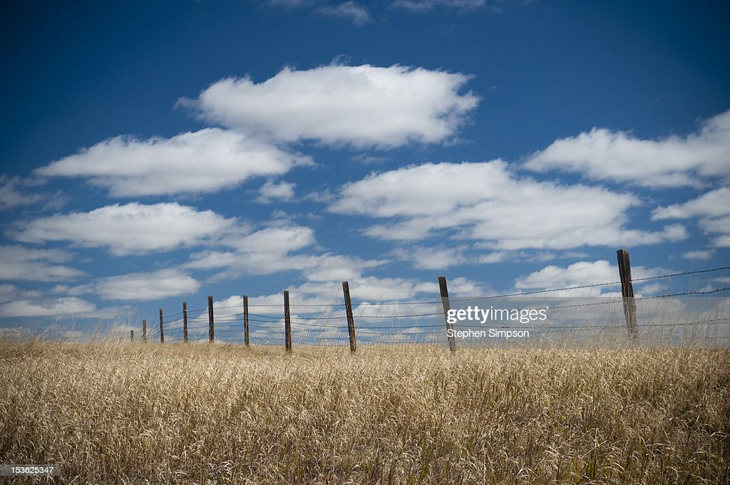 Summer, dry grass, fence and open sky : Stock Photo