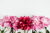 Pink and red peonies flowers with leaves on white isolated background, copy space, flat lay, top view