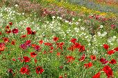 Summer flower meadow