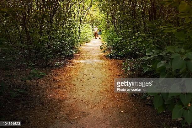 Summer forest walk