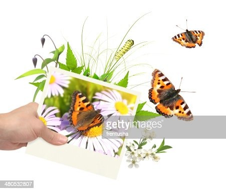 Summer frame with photo, green leaves, flowers and insects : Stockfoto