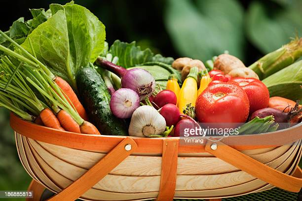 Summer Fresh Vegetable Garden Picked Variety in Harvest Basket