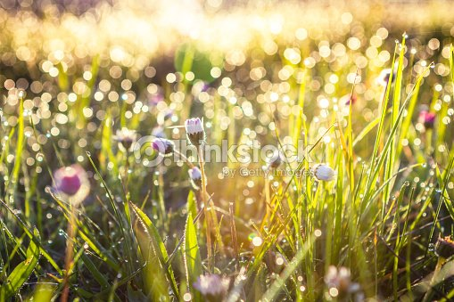 Summer grass field with flowers, abstract background concept, soft focus, bokeh, warm tones : Stock Photo