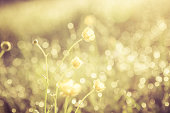 Summer grass field with flowers, golden abstract background concept, soft focus, bokeh, warm tones.