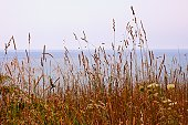 Summer grasses at the beach.