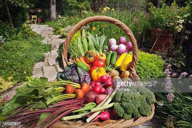 Sommer Garten Reihe von verschiedenen frischem Gemüse im Korb Hz