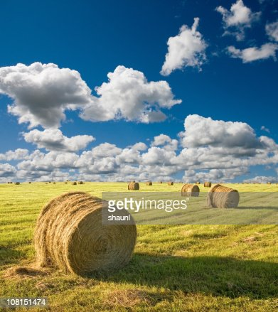 Summer Hay Bales