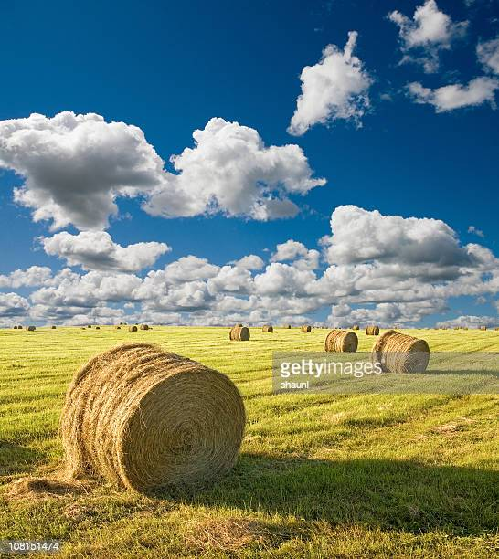 Sommer Hay Bales