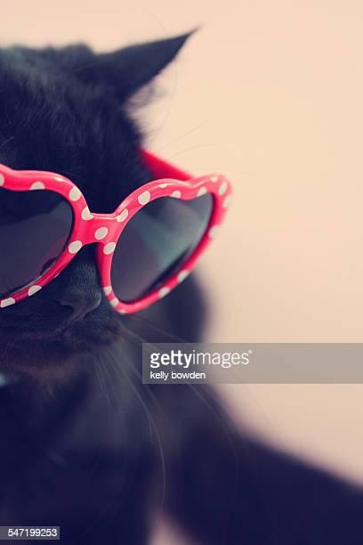 summer kitty cat wearing glasses sunglasses