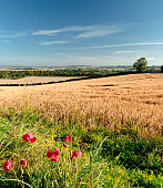 Summer landscape after harvest with blue sky