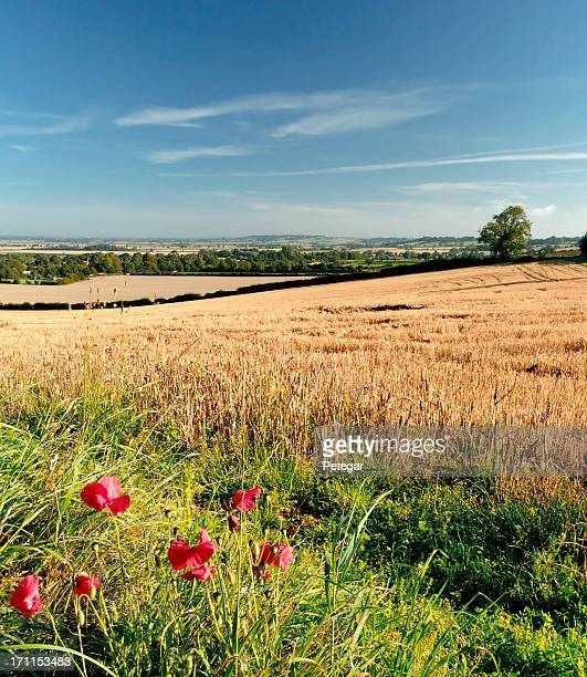 Summer landscape after harvest with blue sky