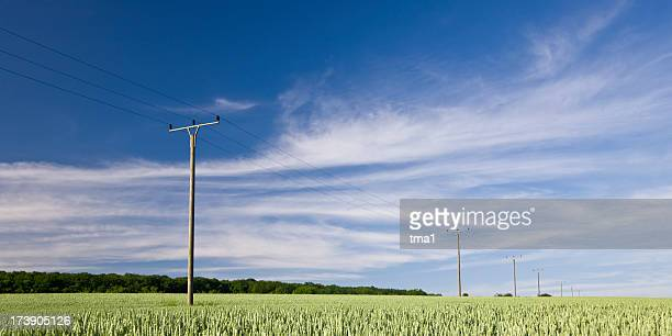 Summer Landscape and Telephone Poles