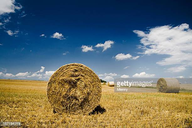 summer landscape hay bales