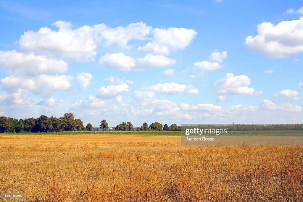Summer landscape in Rhineland