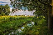Summer landscape in Zeeland Netherlands