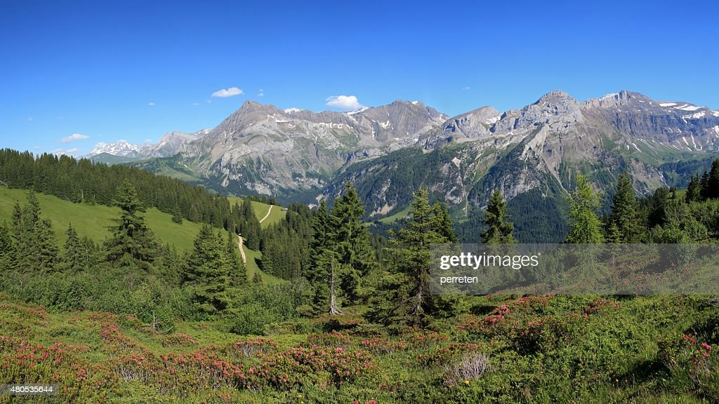 Sommer-Landschaft in Gstaad : Stock-Foto