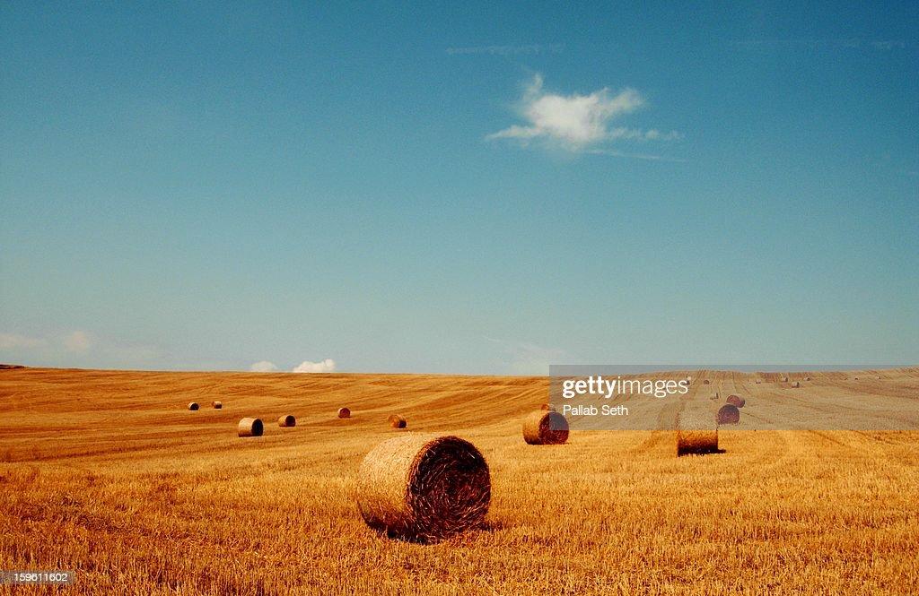 Summer Landscape : Stock Photo