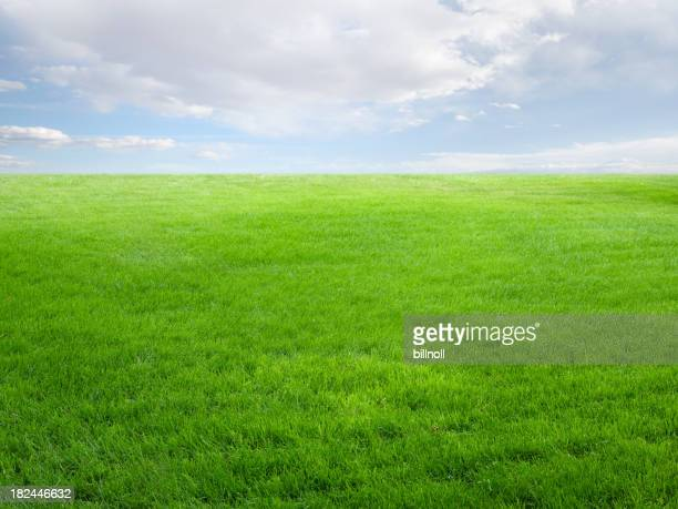 Summer landscape with grass field and sky