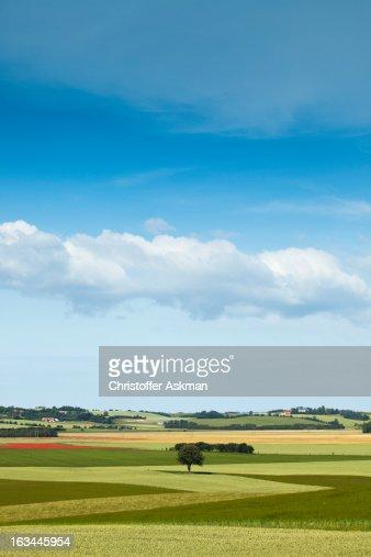Summer landskape : Stock Photo