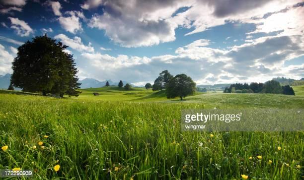 夏の草地でババリアドイツ