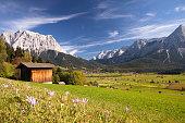summer meadow near ehrwald