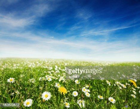 Prairie d'été