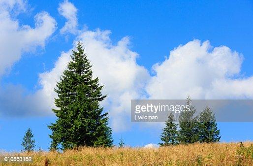 Summer mountain hill. : Stock Photo