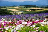Summer of Hokkaido