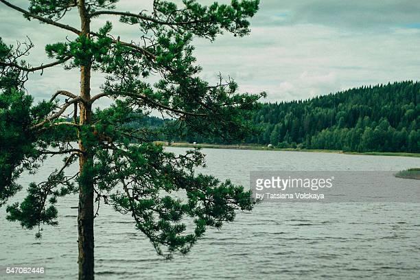 Summer on Ladoga lake, Karelia, Russia