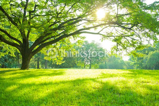 Summer Park : Stock Photo