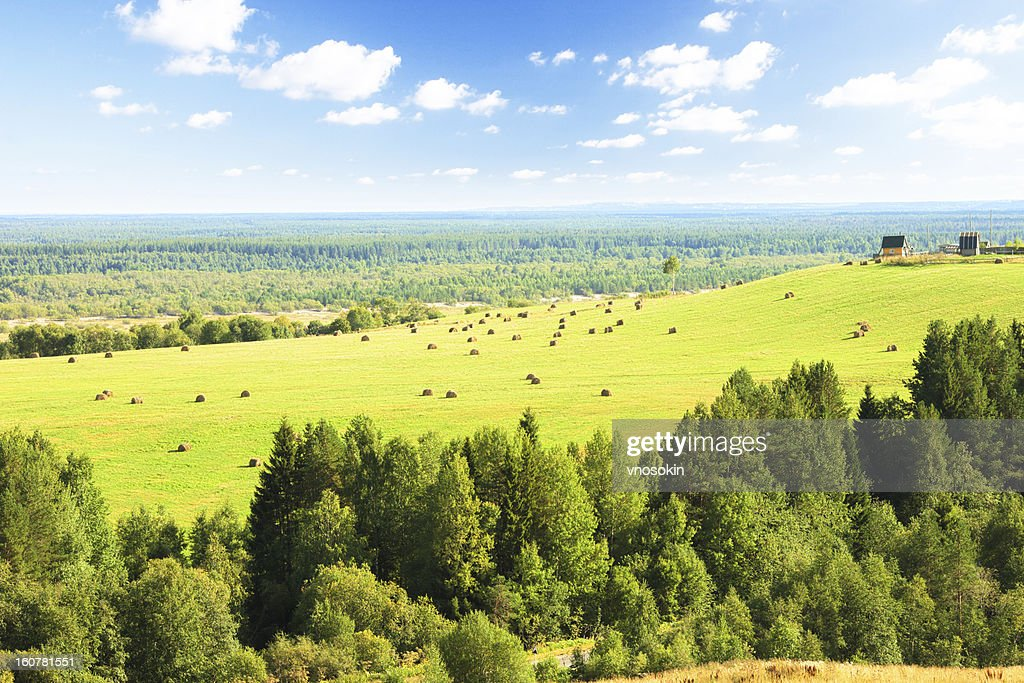 Summer rural landscape : Stock Photo