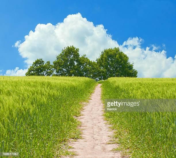 Sommer-Szene mit Feld und Bäume