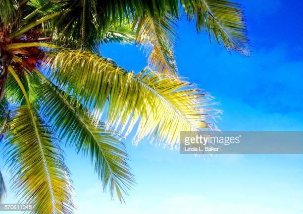 Summer siesta under the palms
