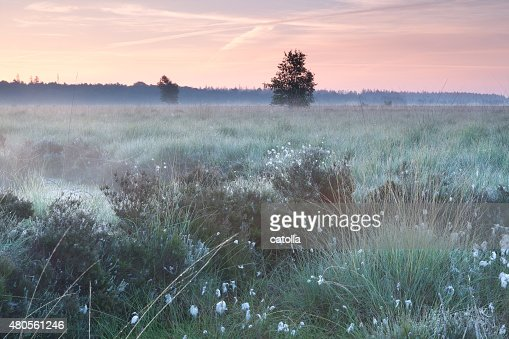 summer sunrise on swamp : Stock Photo