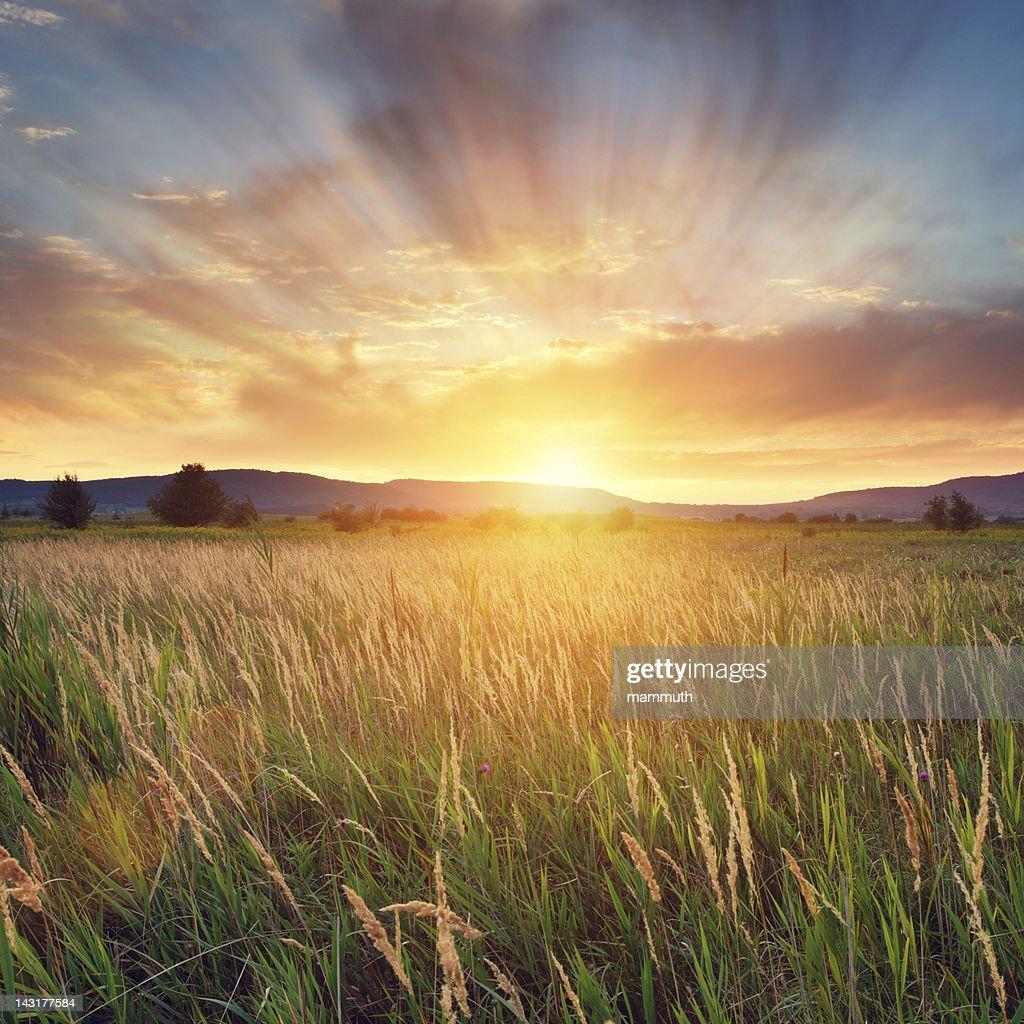 Summer sunset : Stock Photo