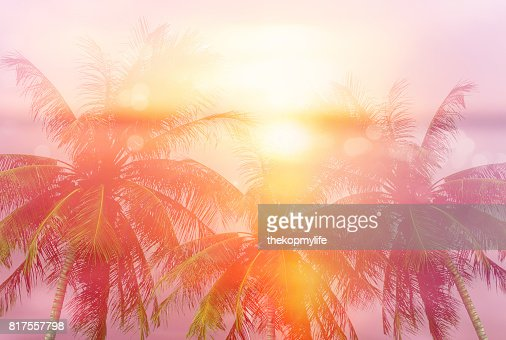 Summer tropical backgrounds with palms : Foto stock