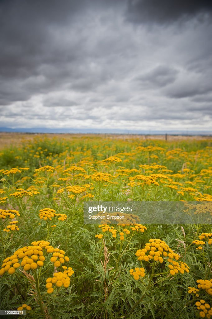 Summer wildflowers and afternoon thunder storm : Stock Photo