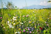 Beautiful wild meadow in the sun.