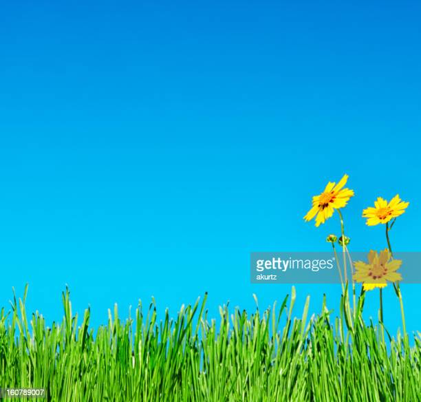 Summertime grass flowers and clear blue sky