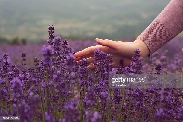 in einem Sommer Lavendel-Feld