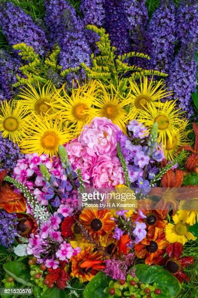 Summery garden flowers after rain