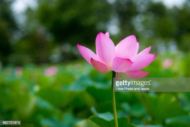 Summur flowers