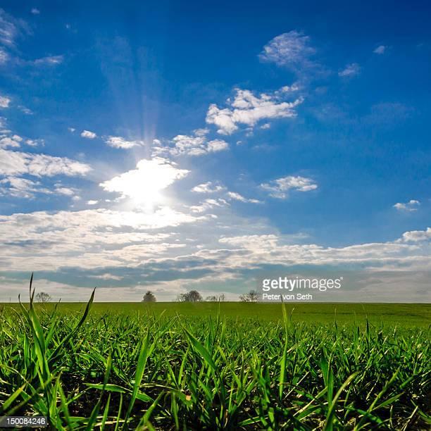 Sun against light above field