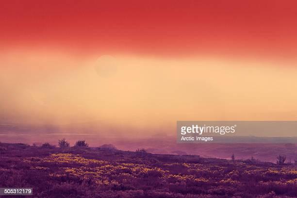Sun and Fog Landscape