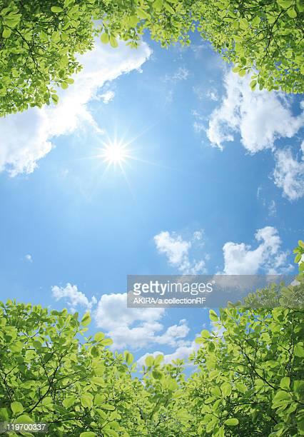 Sun and Foliage