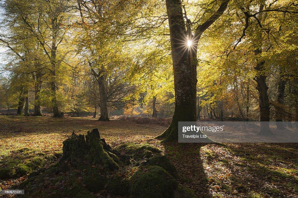 Sun bursting through autumnal trees