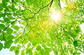 Sun filtering through green leaves